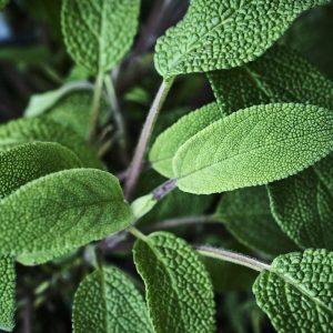sage_herb_garden-2